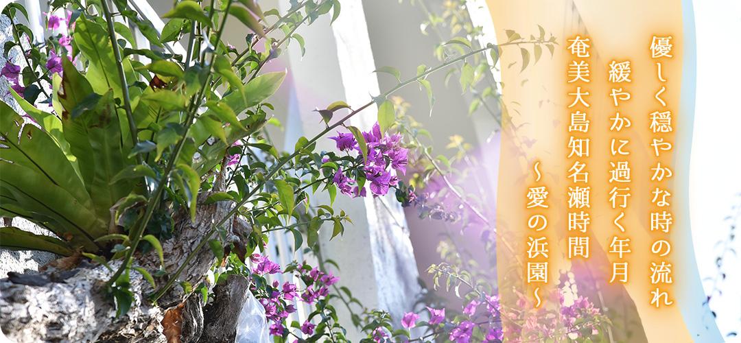 優しく穏やかな時の流れ 緩やかに過行く年月 奄美大島知名瀬時間 ~愛の浜園~